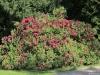 Rododendronový park v Kurort Rathen